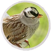 White Crowned Sparrow II Round Beach Towel