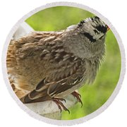 White Crowned Sparrow Sends A Warning Round Beach Towel
