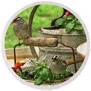 White Crowned Sparrows On The Flower Pot  Round Beach Towel