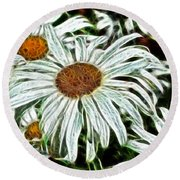 White Daisies Round Beach Towel