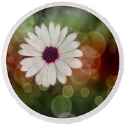 White Daisy In A Sunset Round Beach Towel