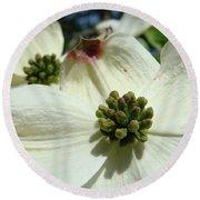 White Dogwood Flowers Art Prints Floral Round Beach Towel