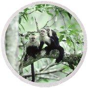 White-faced Capuchins Round Beach Towel