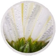White Flower Head With Dew Round Beach Towel