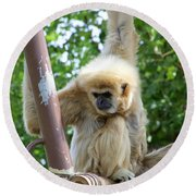 White Handed Gibbon Round Beach Towel