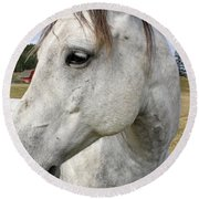 White Horse Closeup Round Beach Towel