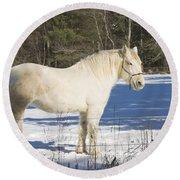 White Horse In Winter Maine Round Beach Towel