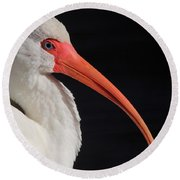 White Ibis Portrait Round Beach Towel
