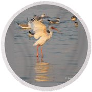 White Ibis With Wings Raised Round Beach Towel