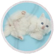 White Kitten Round Beach Towel