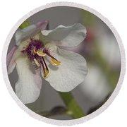 White Mullein - Verbascum Lychnitis Wildflower Round Beach Towel