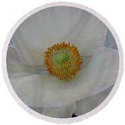 White Poppy Two Round Beach Towel