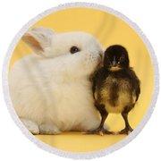 White Rabbit And Bantam Chick On Yellow Round Beach Towel
