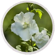 White Rose Of Sharon Round Beach Towel by Teresa Mucha