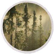 White Spruce In Mist At Sunrise Round Beach Towel
