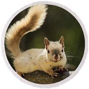 White Squirrel Round Beach Towel