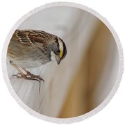 White Throated Sparrow Round Beach Towel