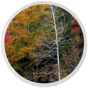 White Tree Fall Colors  Round Beach Towel