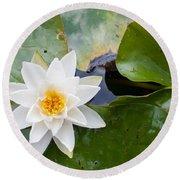 White Water Lily Round Beach Towel