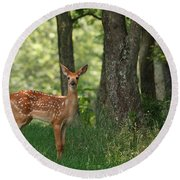 Whitetail Deer Fawn Round Beach Towel