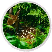 Whitetail Fawn And Ferns Round Beach Towel