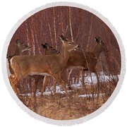 Whitetails On The Move Round Beach Towel