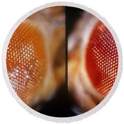Wild & White-eosin Eyes In Drosophila Round Beach Towel