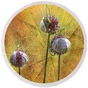 Wild Allium Ala Grunge Round Beach Towel