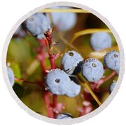 Wild Blue Berries With Water Drops  Round Beach Towel