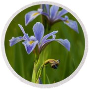 Wild Blue Flag Iris Round Beach Towel