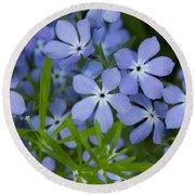 Wild Blue Phlox Flower 1 A Round Beach Towel