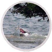 Wild Dolphin Feeding Round Beach Towel