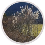 Wild Fruit Tree In The Country Round Beach Towel