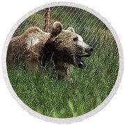 Wild Life Safari Bear Round Beach Towel
