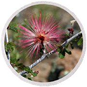 Wild Pink Fairy Duster Round Beach Towel