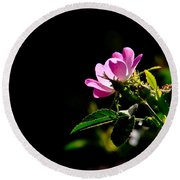 Wild Rose Along Galls Creek Round Beach Towel