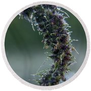Wildflower Dew Covered Round Beach Towel