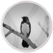 Willie Wagtail V2 Round Beach Towel