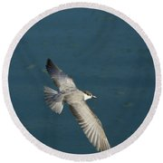 Wings Over Water Round Beach Towel