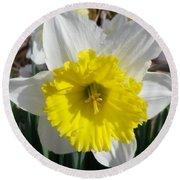 Winter Daffodil  Round Beach Towel