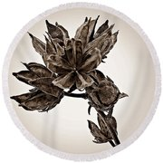 Winter Dormant Rose Of Sharon - S Round Beach Towel