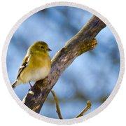 Winter Morning Song Bird Round Beach Towel