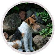 Wirehair Fox Terrier Round Beach Towel