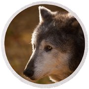 Wolf Outlined By The Sun Round Beach Towel