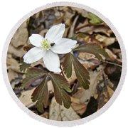 Wood Anemone - Anemone Quinquefolia Round Beach Towel
