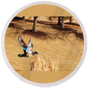 Wood Duck In Fflight Round Beach Towel