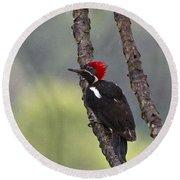 Woodpecker 4 Round Beach Towel