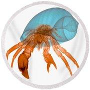 X-ray Of Hermit Crab Round Beach Towel