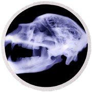 X-ray Of Kodiak Bear Skull Round Beach Towel