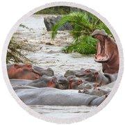 Yawning Hippo Hippopotamus Amphibius Round Beach Towel